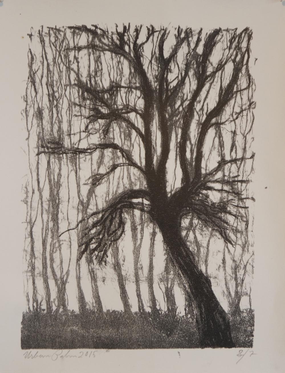 Urban Palm, litografi 2015